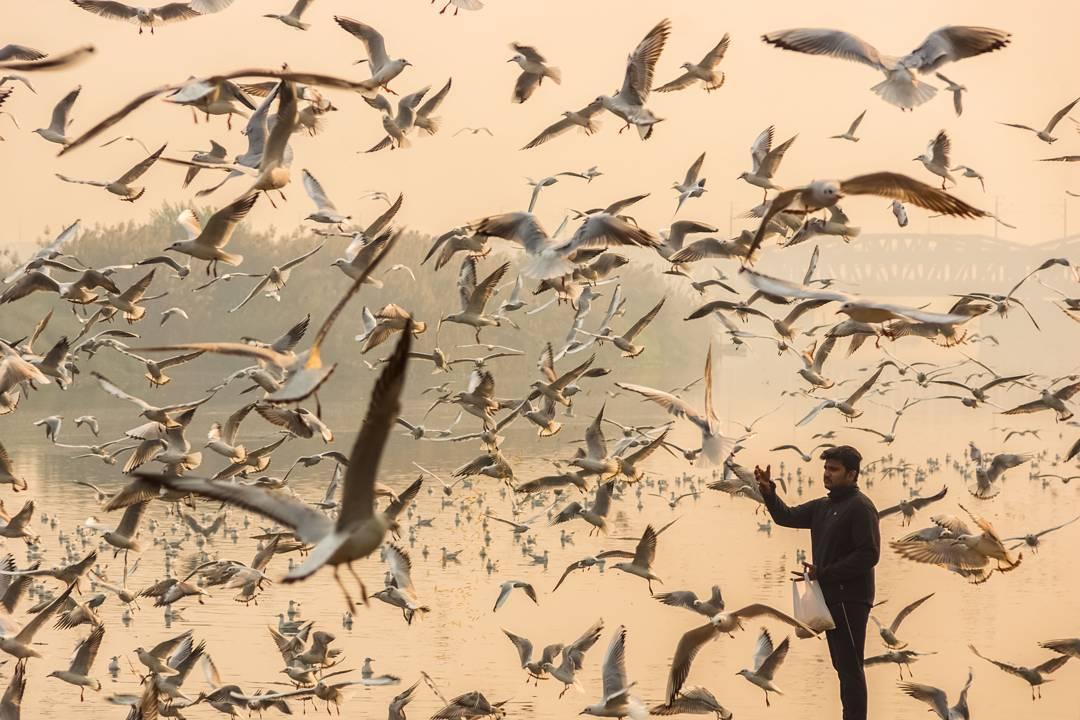 seagulls-6