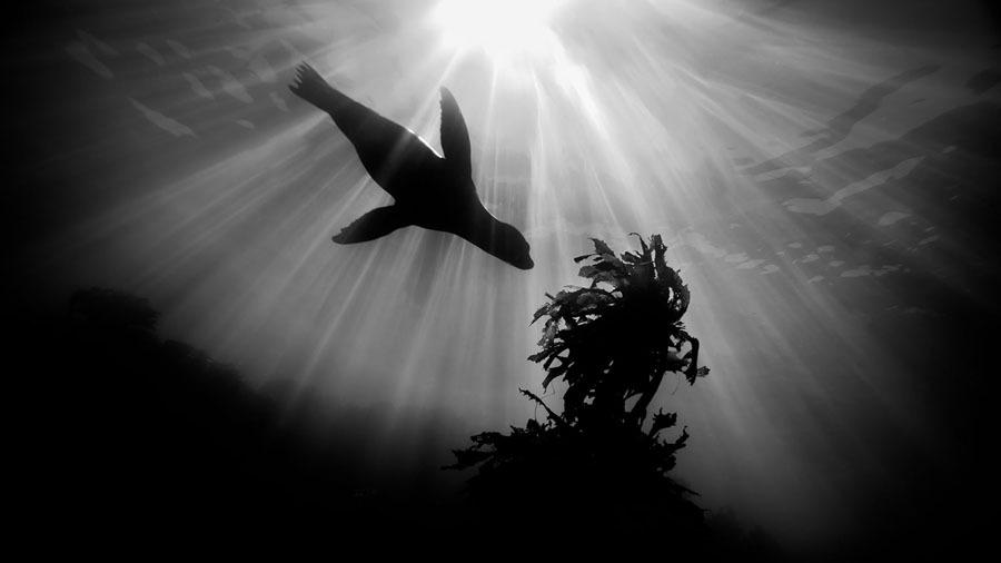 Underwater-Photography11