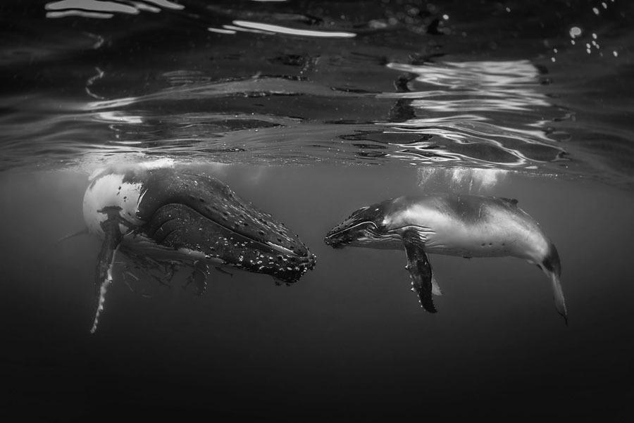 Underwater-Photography13