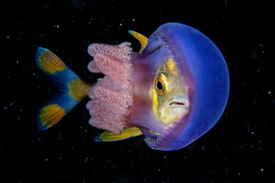 Underwater-Photography14