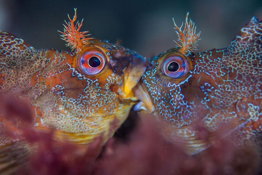 Underwater-Photography3