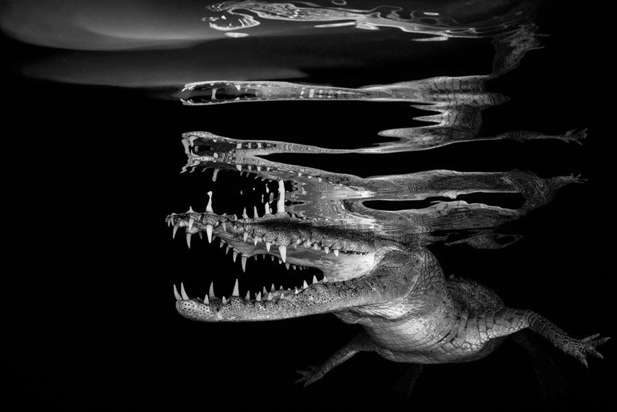 Underwater-Photography8