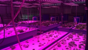 1280px-Light_on_Aquaponics