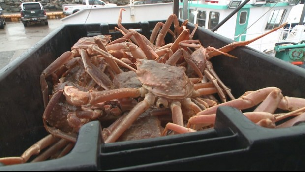 crabes-bac-peche