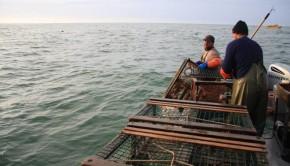 pecheurs-homard-cages-bateau-golfe