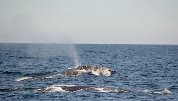baleines-noires-charlotte-horvath