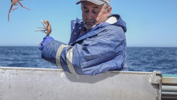 long-format-image-titre-crabe-baleine-noire-marcel-le-breton