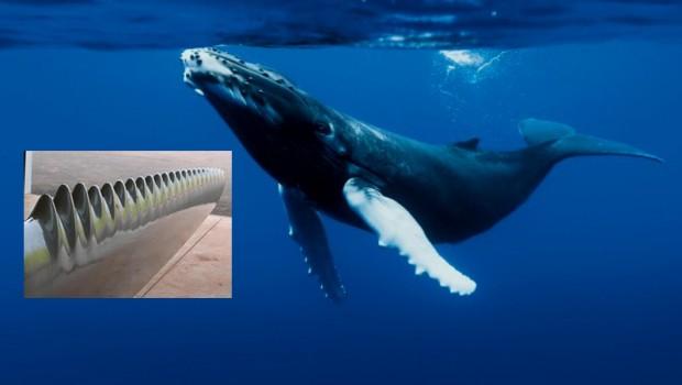 whalepower