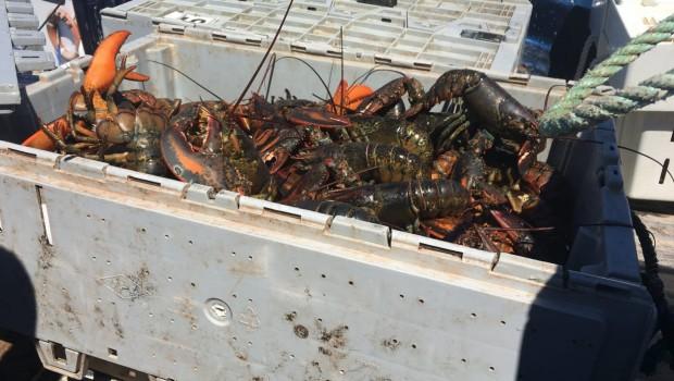homard-debarquement-2