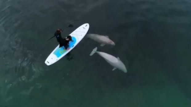 belugas-ingonish-cap-breton-drone