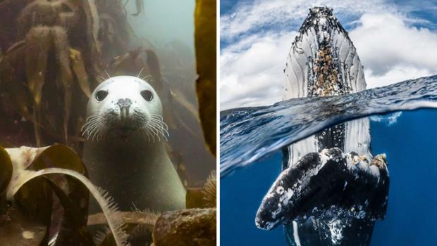 concours-photographies-sous-marines-2018