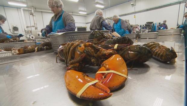 homard-usine-generique