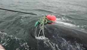 baleine-noire-secours-2