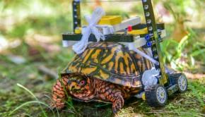 une-tortue-avec-un-fauteuil-roulant-en-lego