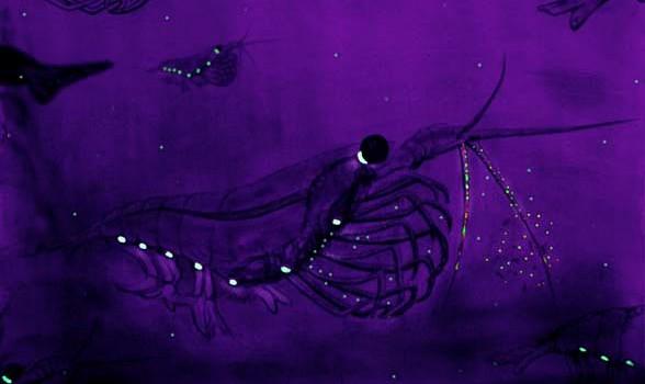 Bioluminescencekils_UweKils