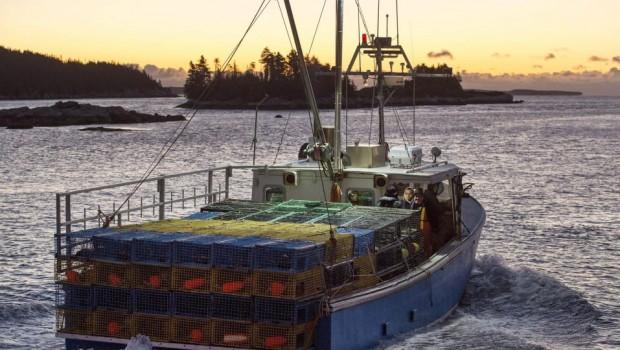 homard-peche-nouvelle-ecosse-homards-sud-ouest-zone-33-34