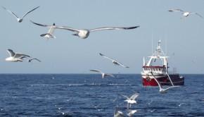 long-format-crabe-baleine-noire-marcel-le-breton