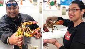 Calico-Lobster-Nicolas-Rita
