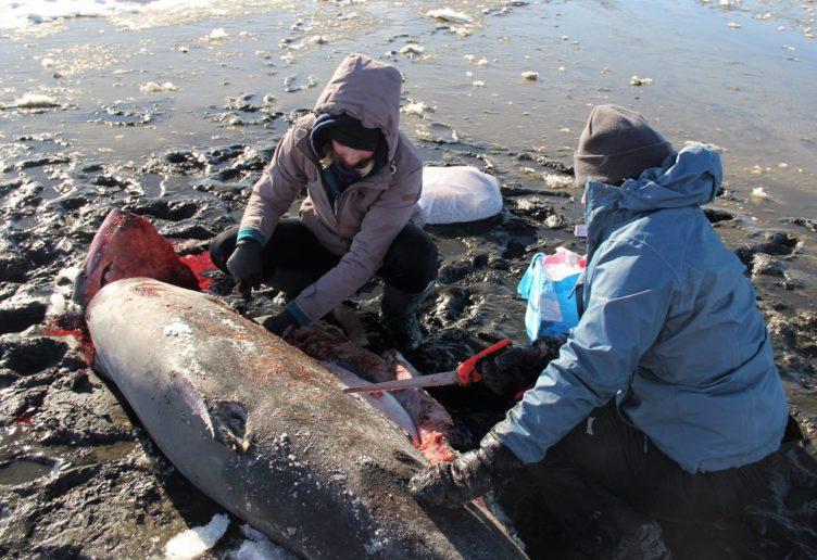 requin-1-e1515071697713