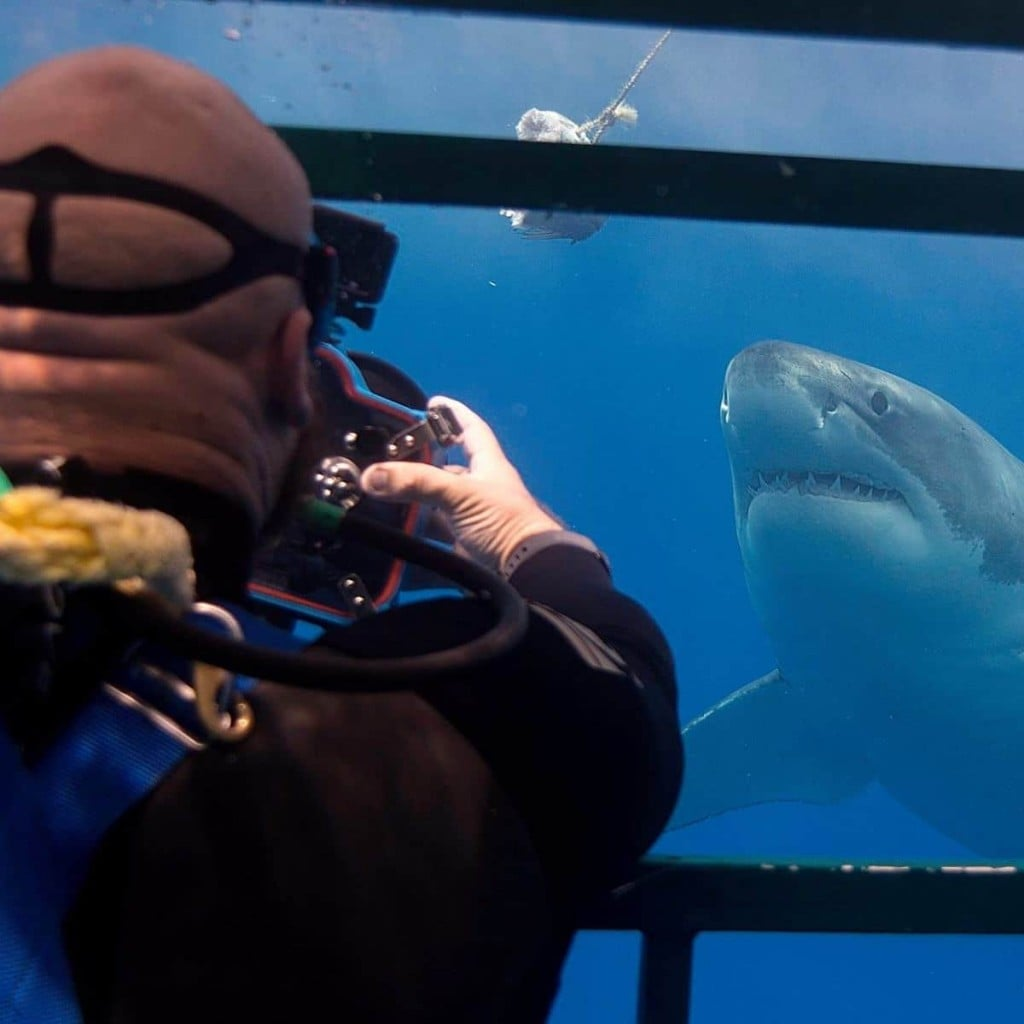 requin-photographie-dents-mer-euan-rannachan-2