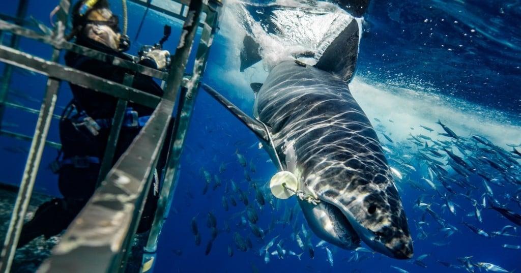requin-photographie-dents-mer-euan-rannachan-3