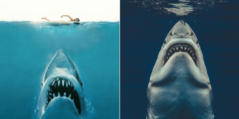 requin-photographie-dents-mer-euan-rannachan-800x400