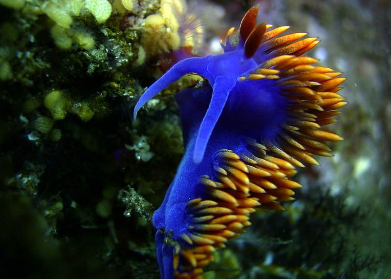 La-diversite-de-la-beaute-des-limaces-de-mer-sea-slug-2