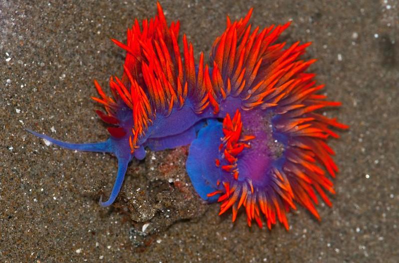 La-diversite-de-la-beaute-des-limaces-de-mer-sea-slug-3