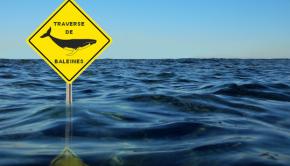 image-acadienne-traverse-de-baleine-eau-1