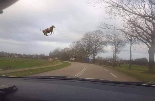 image-acadienne-vache-vent-ciel