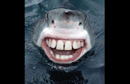 image-acadienne-requin-dent