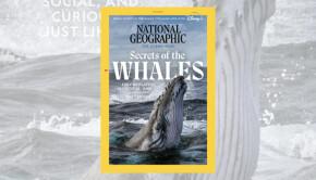 NatGeo-is-Providing-Ways-to-Help-Threatened-Creatures-and-Habitats-800x420