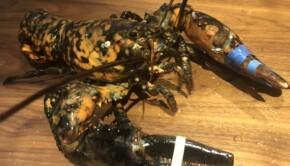 1621353301_Les-employes-de-Red-Lobster-reperent-une-espece-rare-1068x608